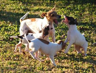 Tiggas & pups