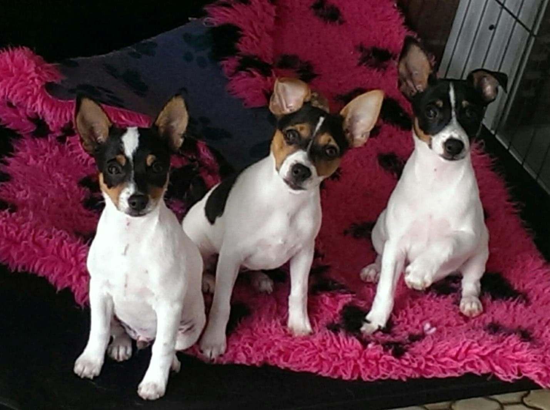 Charbon pups.jpg