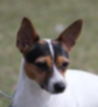 Charbon dog 6.jpg