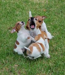 Aimees & pups