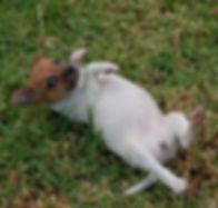Purchas a pup 1.jpg