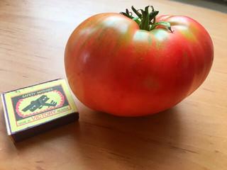 """Самые ранние томаты - сорт """"Ранняя любовь"""""""