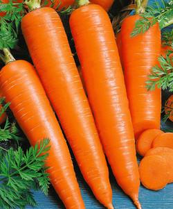 "Морковь ""Королева осени"""