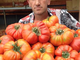 Юсуповский - крупные томаты, которые реально вырастить!