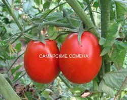 Самарские семена
