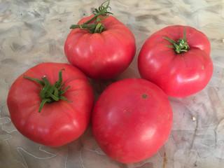 """Отвечаем на вопросы: """"Что такое безрассадный сорт томата?"""""""