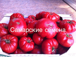 """""""Юсуповский розовый"""""""
