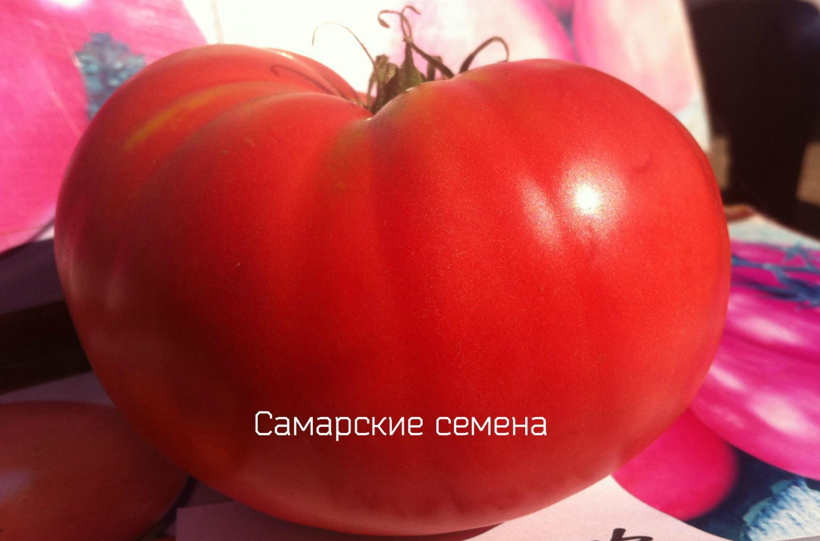 """Сызранская розовая крупная"""