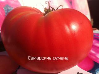Сызранская розовая крупная - самый вкусный сорт из помидорной столицы России