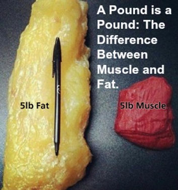 Muscle_and_Fat_033F8E68B9868.jpg