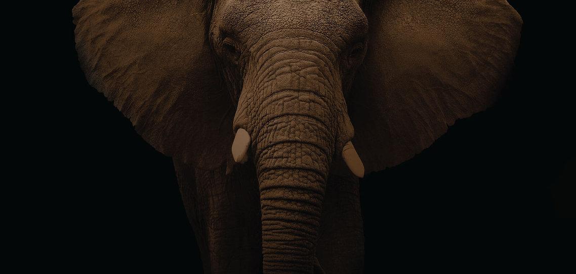 bg-elephant-compliance.jpg