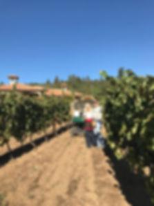 Collar Family Vineyard