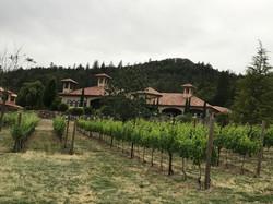 Collar Family Vineyards