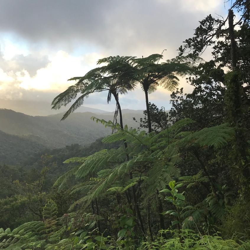 Traversée de la forêt tropicale