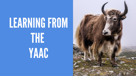 Learning from the YAAC