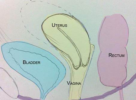 Pelvic Organ Prolapse - Part 1