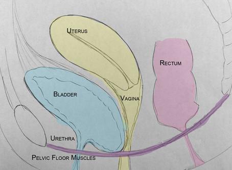Pelvic Organ Prolapse - Part 2