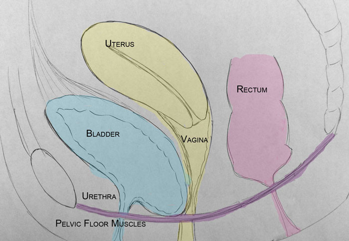 Bladder prolapse diagram
