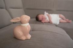 lapin, photo bébé, naissance