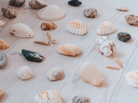 Shelling: Souvenirs from the Sea