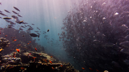 Ocean Pollution: The Dirty Facts