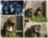 Photo Collage_20191002_104736816.jpg