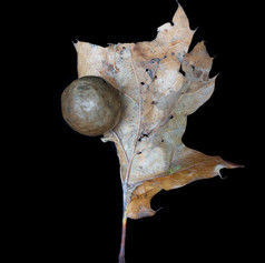 Leaf with Nest.jpg