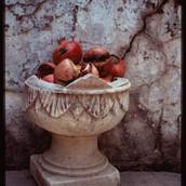 Pomegranates In an Urn, Tuscany 1992.jpg