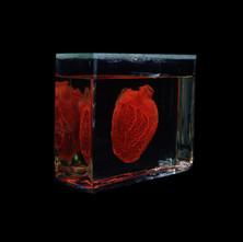 Heart 1994.jpg