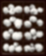 Moonsnails.jpg