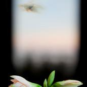 Evergreen Window.jpg