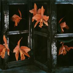 7_OrangeOrchids   1979.jpg