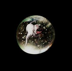 Snow Globe - Pit Bull  1996.jpg