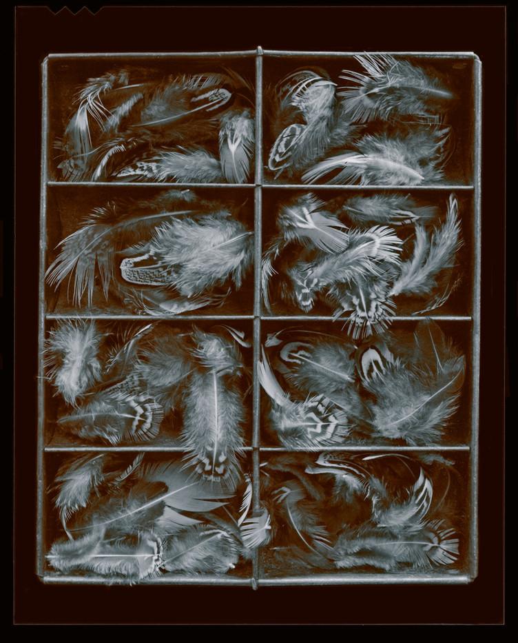 Pheasant 1976.jpg