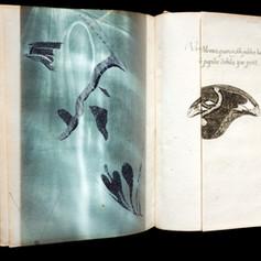 Moth Book 2008.jpg