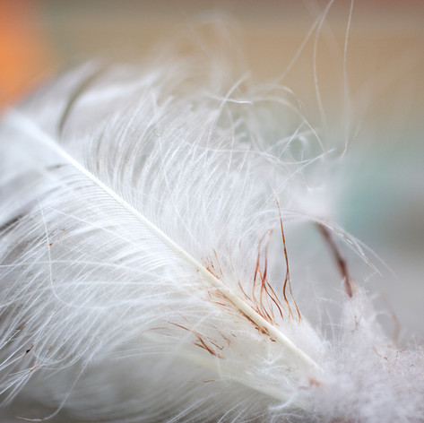 Torn Feather 2005.jpg