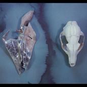 Silver Fox  1987.jpg
