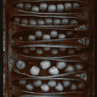 Pods of Chance 1977.jpg