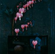 14_Hearts.jpg