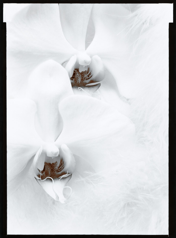 Two Orchids 1977.jpg