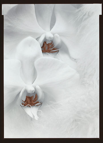 1_two orchids, 1976.jpg