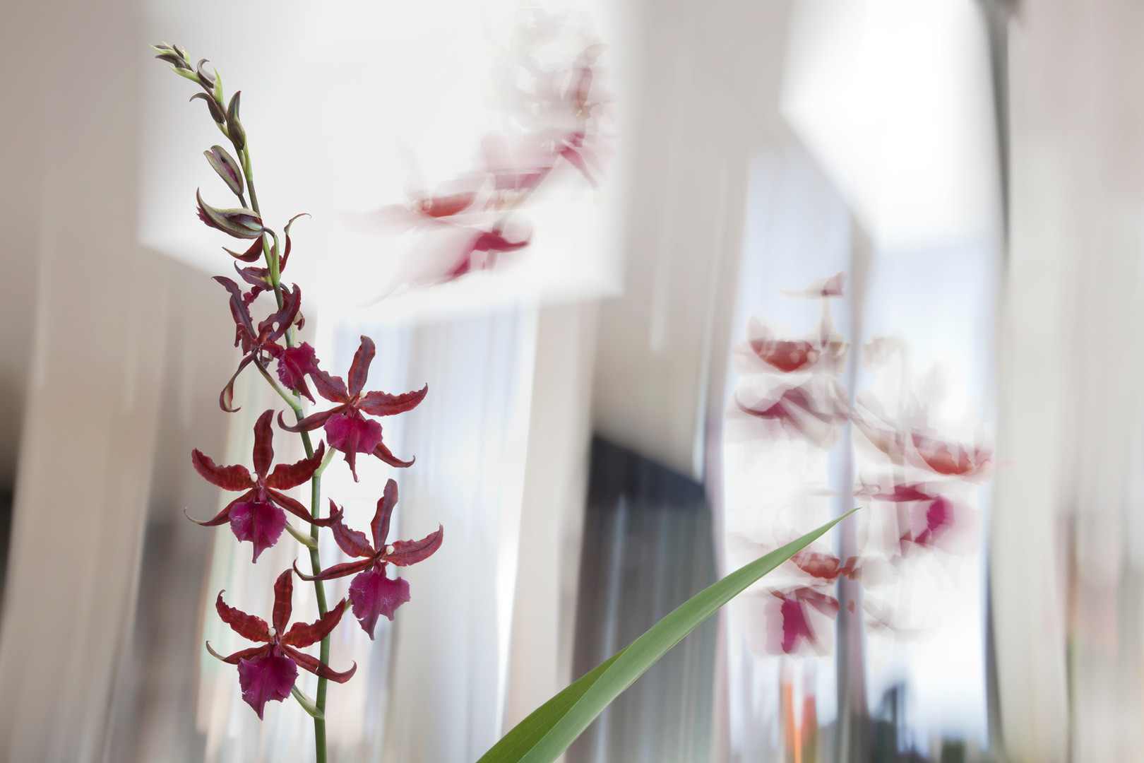 Red Orchids.jpg