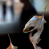 Two leaves.jpg
