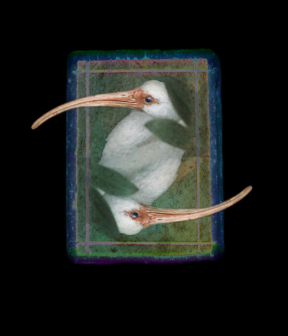 Missing Piece - Ibis 1993.jpg