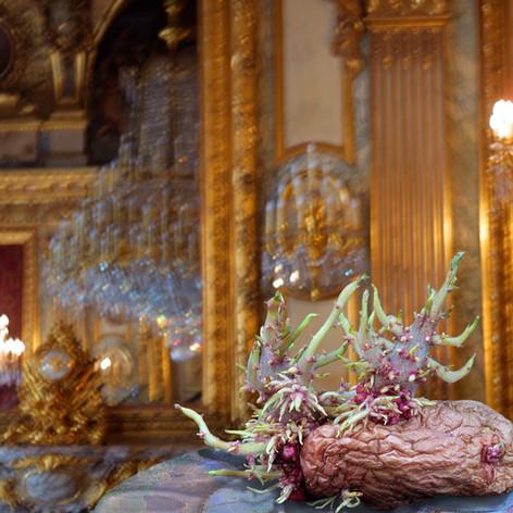 Palace Potato 2001.jpg
