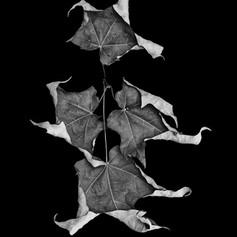 Four Leaves.jpg