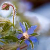 Blue Star 2005.jpg