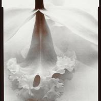 Orchid 1977.jpg