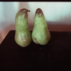 Large Pears, Tuscany 1992.jpg