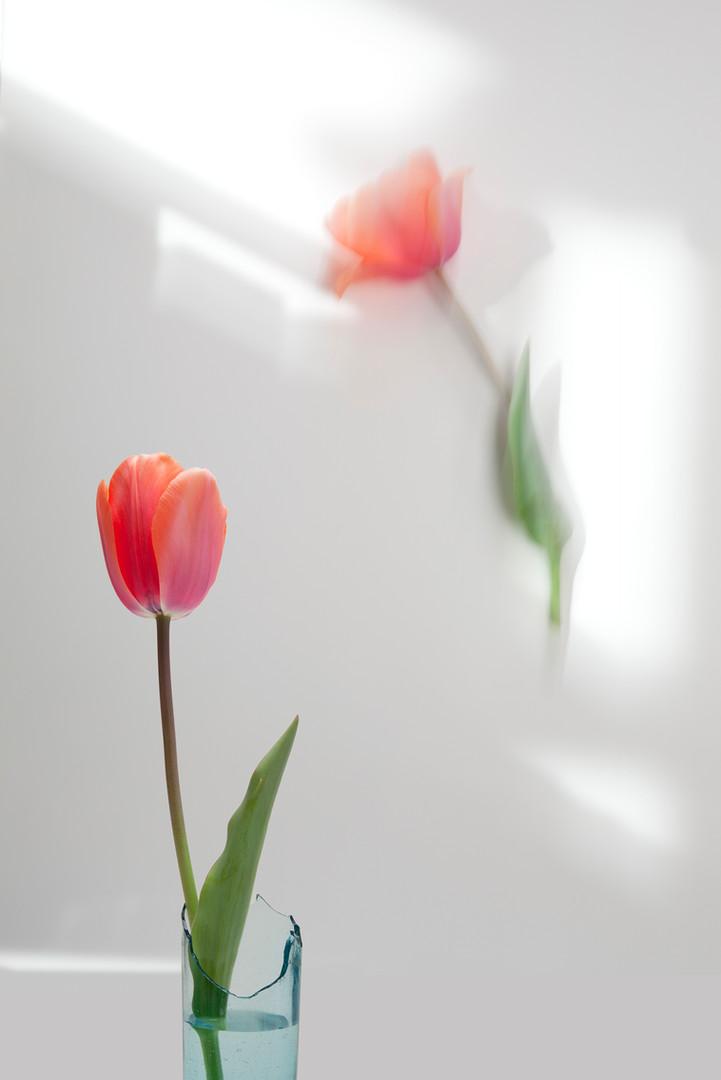 Two Tulips.jpg